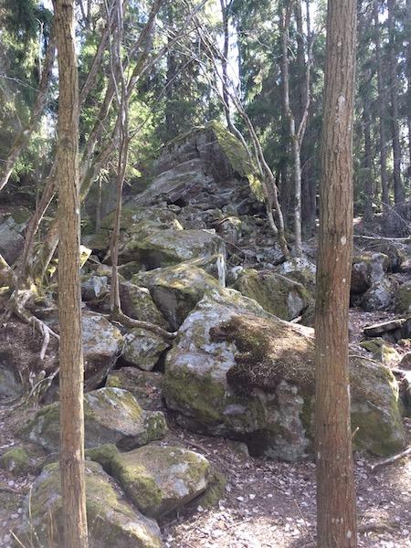 Pretty-forest_judarn-2017