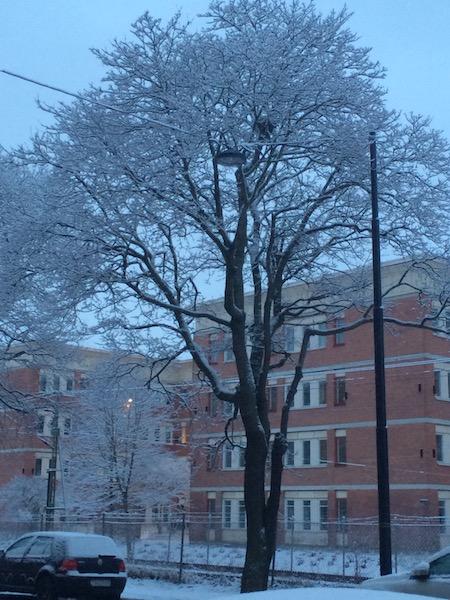 Tree in Winter Sundbyberg Stockholm February 2014